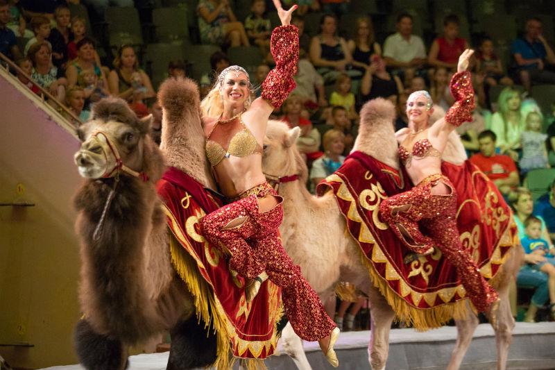 Представление с верблюдами
