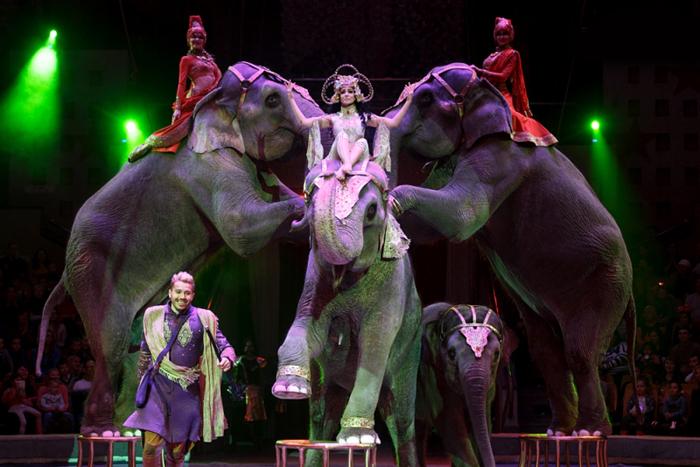 цирк шоу инди-ра