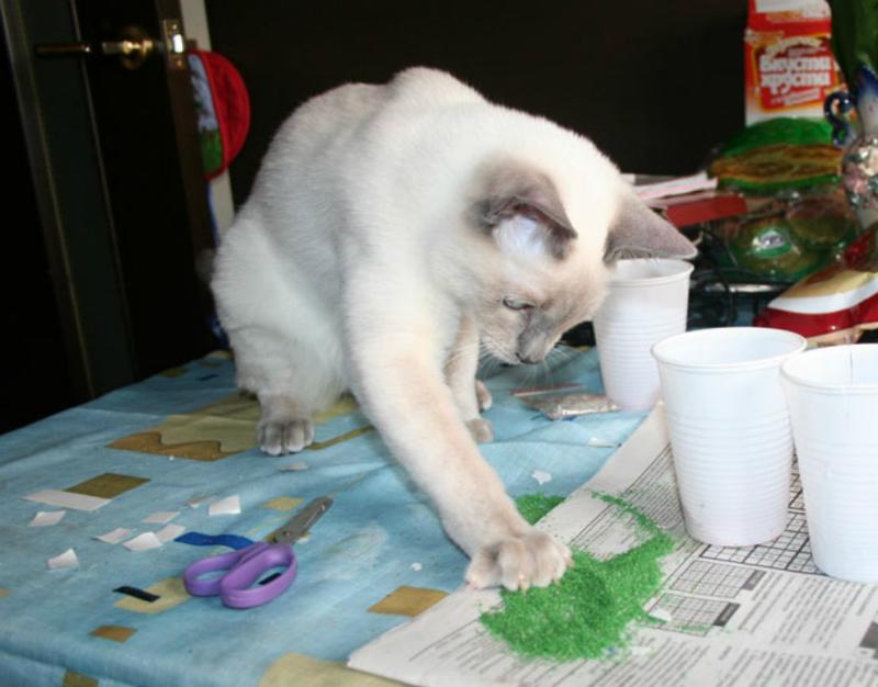 Кот и цветной песок
