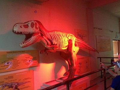 динозаврия крит