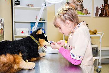 ветеринар кидспейс