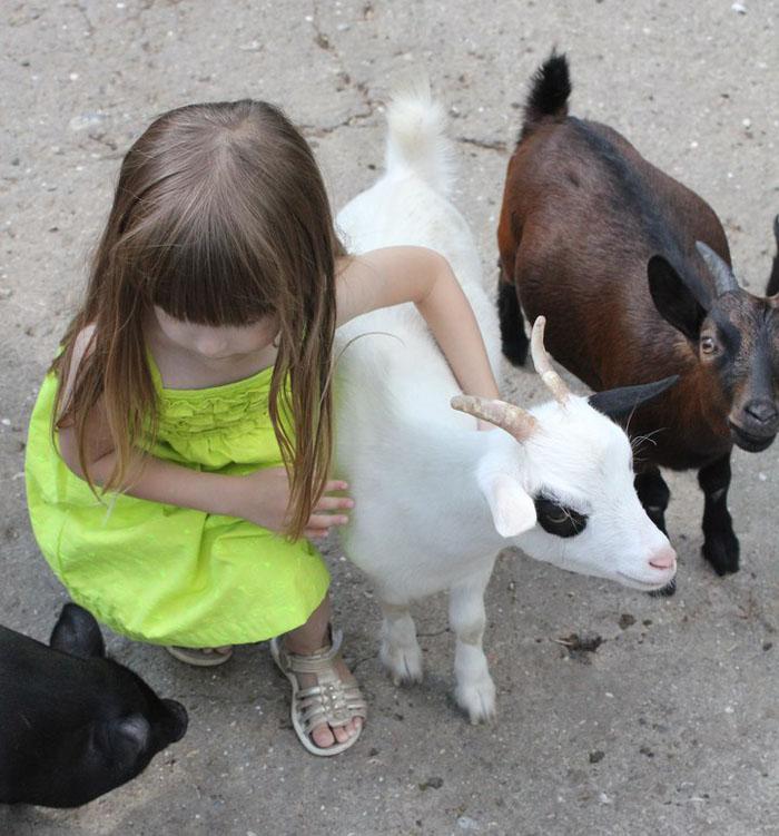 девочка и козочки