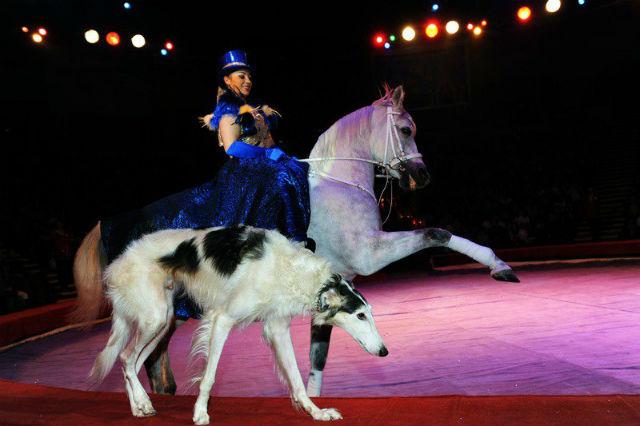 Наездница на коне