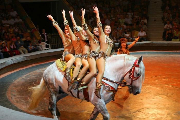 Лошади цирковые