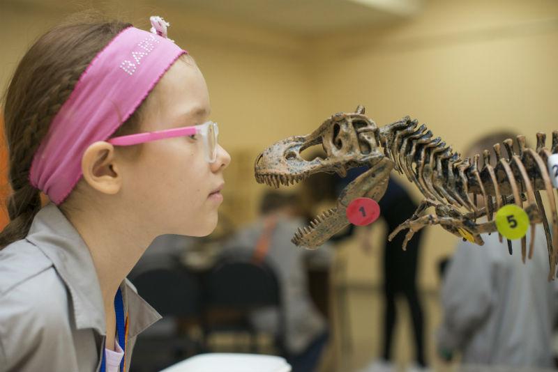 Девочка рассматривает макет скелета динозавра