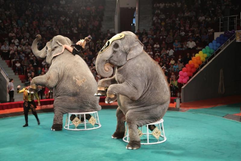 Цирк со слонами