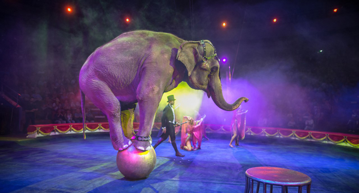 шоу цирк инди-ра