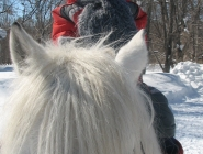 Белый снег, белый конь...